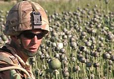 NATO mission in Afghanistan: protect heroin traffickers