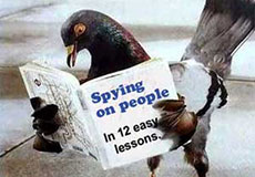 Spy Pigeons Circle the World