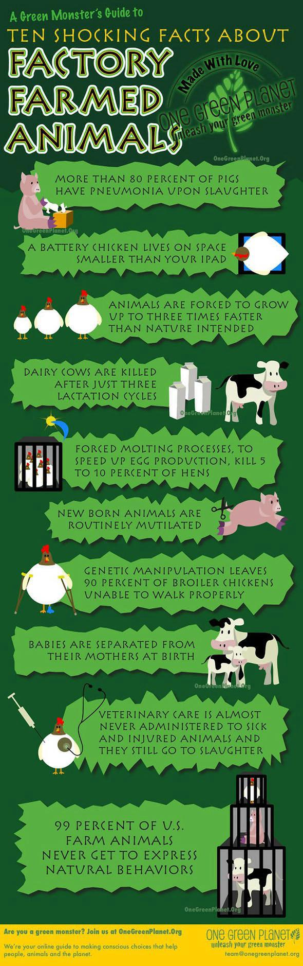 Issue of factory farming of animals